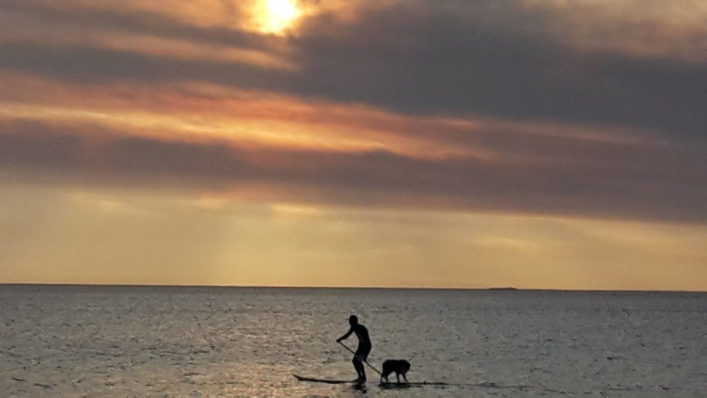 paddle boarder and dog