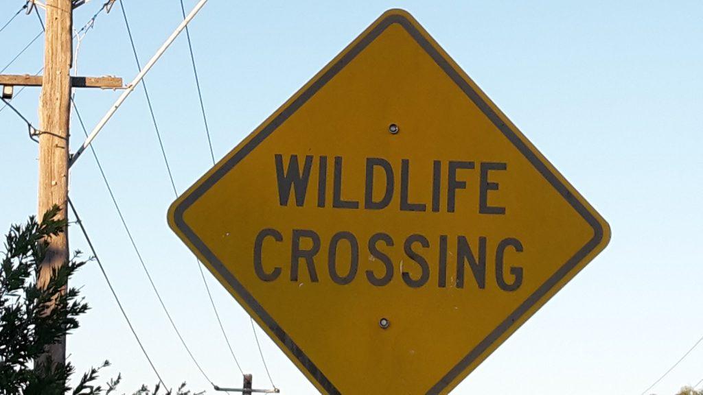 Wild life crossing
